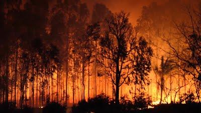แผนการ เผยแพร่เพื่อลดไฟป่าครั้งใหญ่ในสหรัฐอเมริกาฝั่งตะวันตก เจ้าหน้าที่สหรัฐฯในวันศุกร์ได้เปิดเผยแผนการที่ครอบคลุมสำหรับการกำจัด